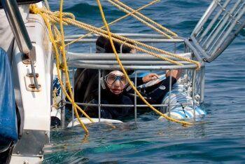Shark cage diving Gansbaai Gans Bay